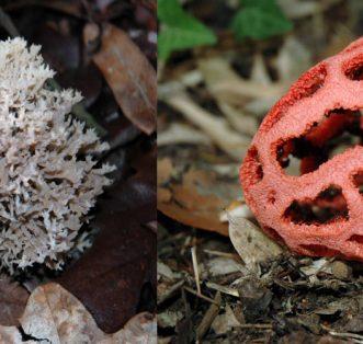 XX Encontro Micológico no Mosteiro de Tibães. Vamos falar de cogumelos!