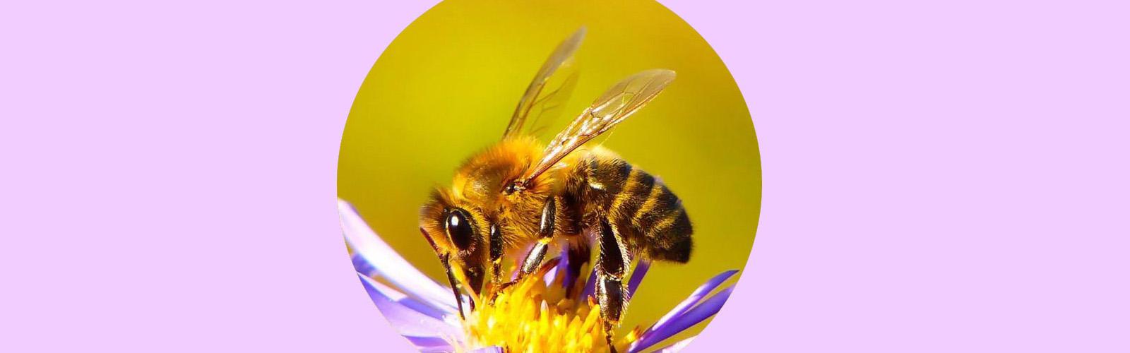 Cartaz Dia Mundial da Abelha
